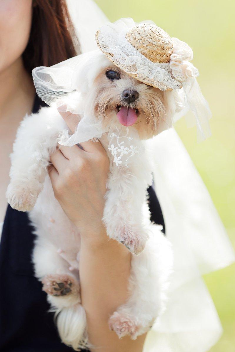 寵物婚紗,高雄寵物婚紗,台南寵物婚紗,婚紗攝影,狗狗婚紗,自助婚紗